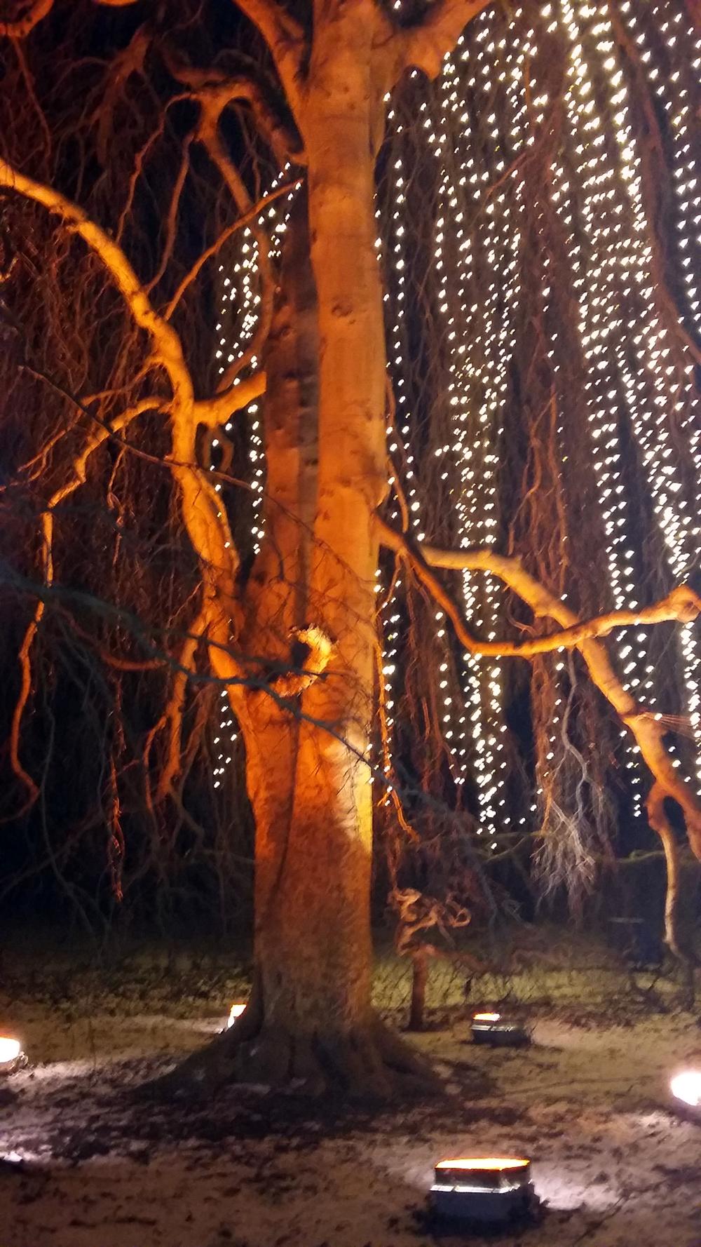 Christmas Garden – Naturgewalt im Lichterglanz