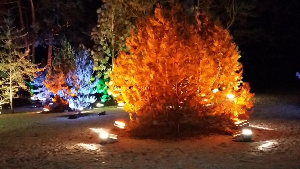 Christmas Garden – Zauberwald