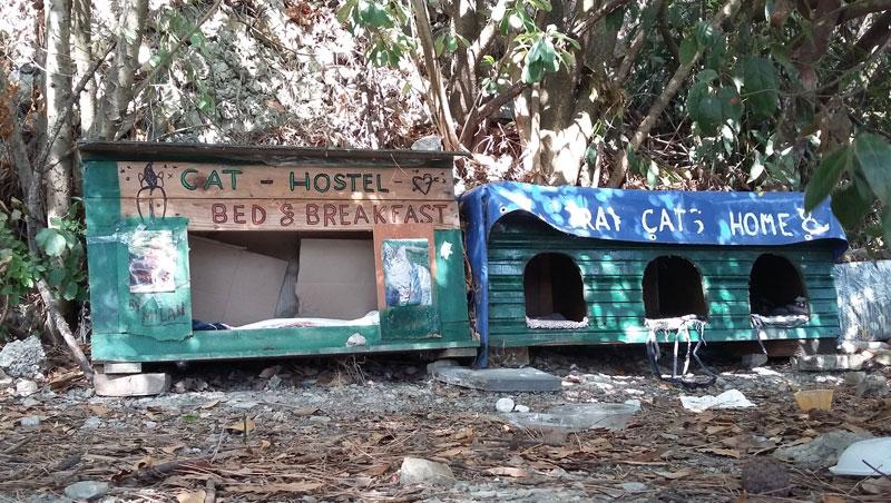 Slowenien - Katzenhostel in der Nähe des Hotel Bernadin in Portoroz