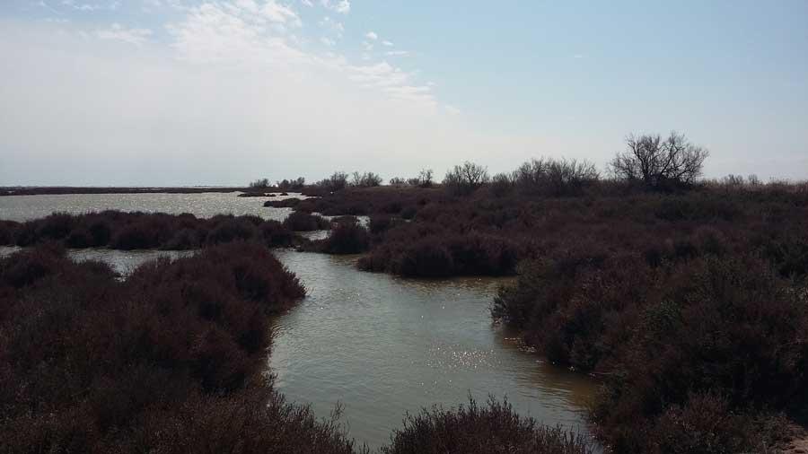 Naturpark Camargue - am Ufer eines Salzsees