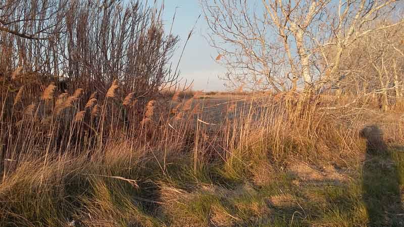 Gräser in der Gegend um Astouin