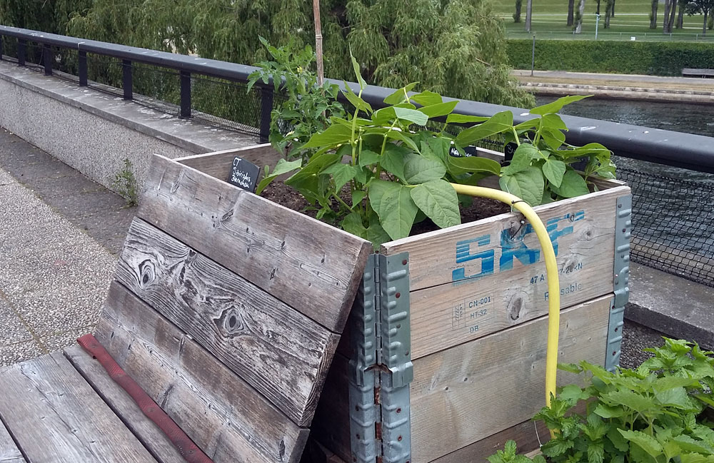 Bepflanzte Holzbox auf der Dachterrasse des Hauses der Kulturen der Welt
