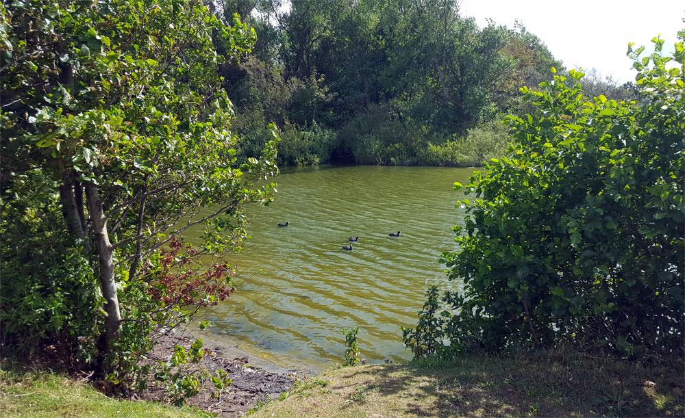 See mit Enten in der Mitte des Centerparks Zandvoort