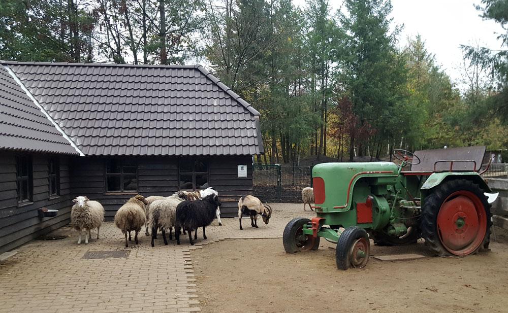 Der Kinderbauernhof im Centerpark Bispinger Heide