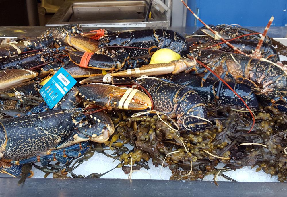Fangfrischer Hummer vot einem Fischrestaurant