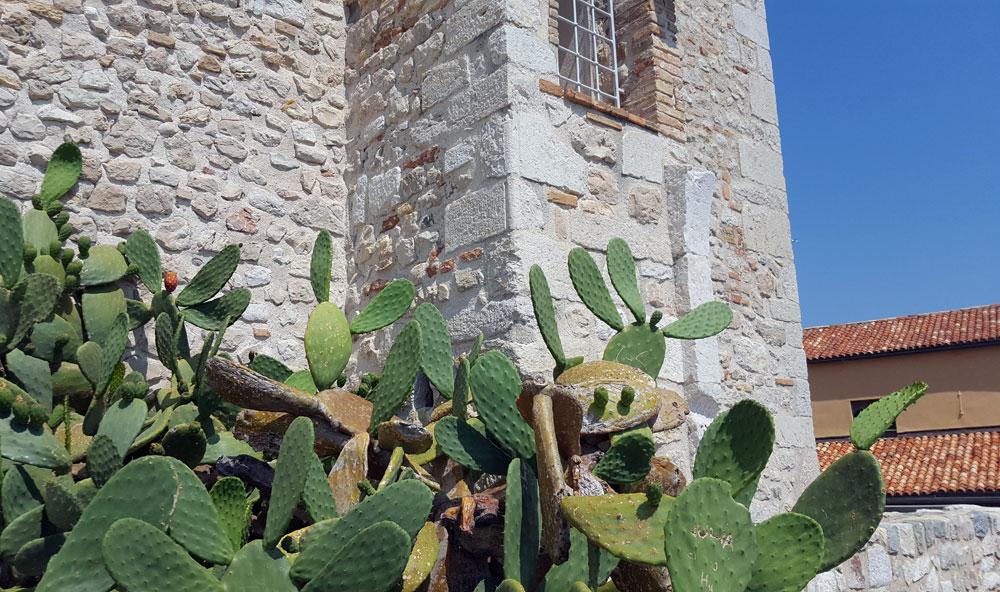 Ein lachender Kaktus vor dem Picassomuseum