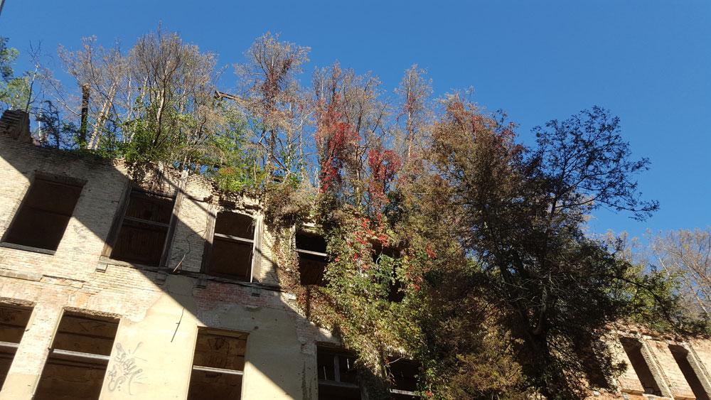 Auf dem Dach des Alpenhauses wachsen Bäume