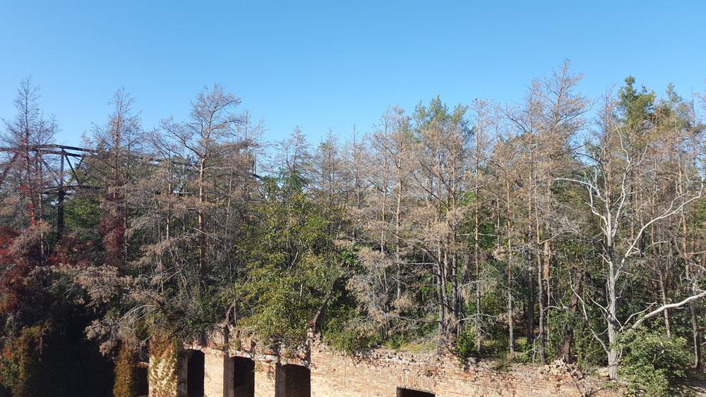Noch mehr Bäume auf dem Dach des Alpenhauses