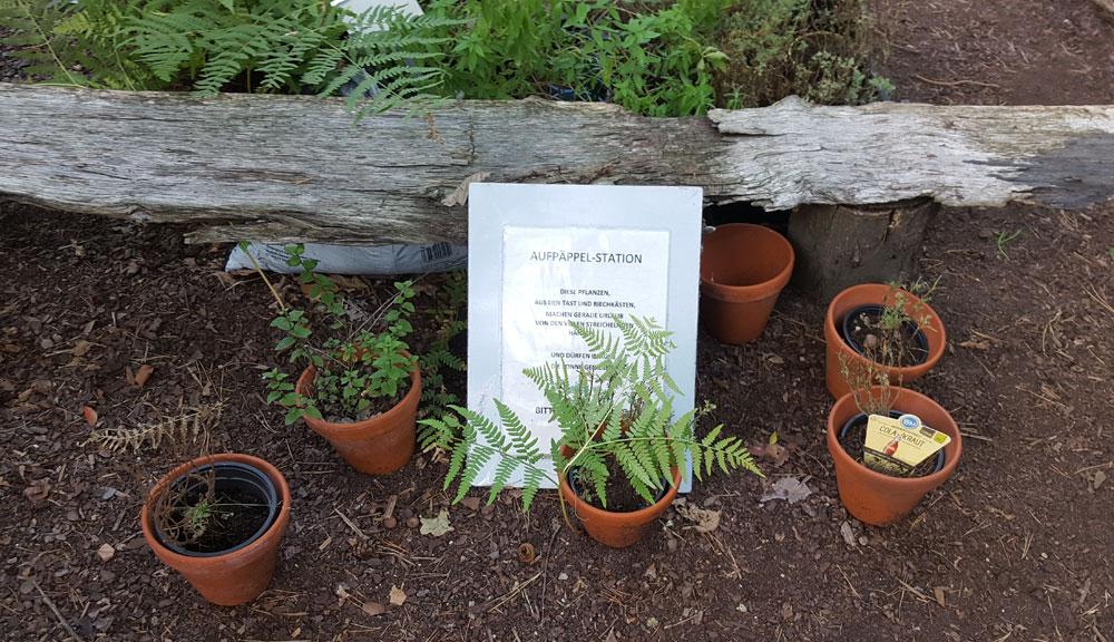 Die Anzuchtstation - Blumentöpfe im Kräutergarten