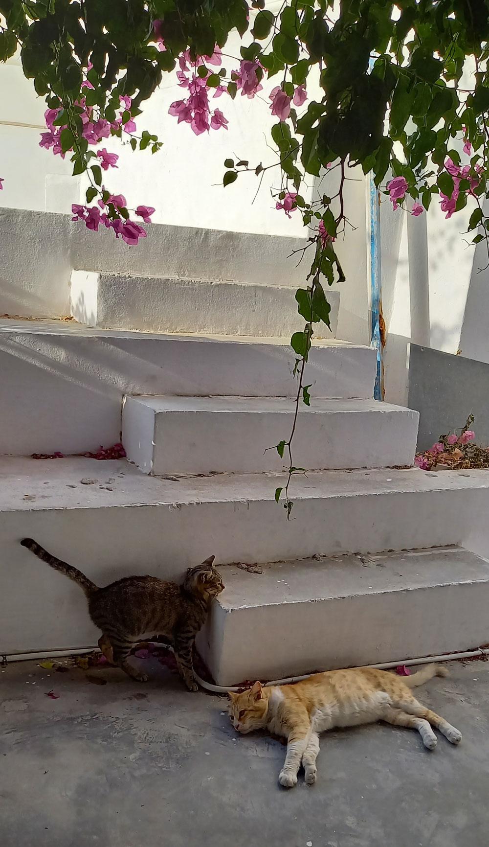 Katzen an einem Fotopoint in Oia