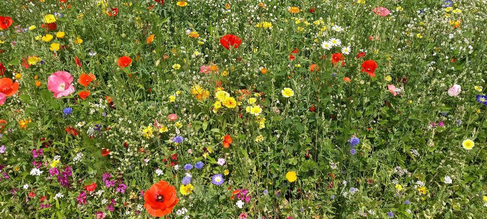 Blumenwiese im egapark