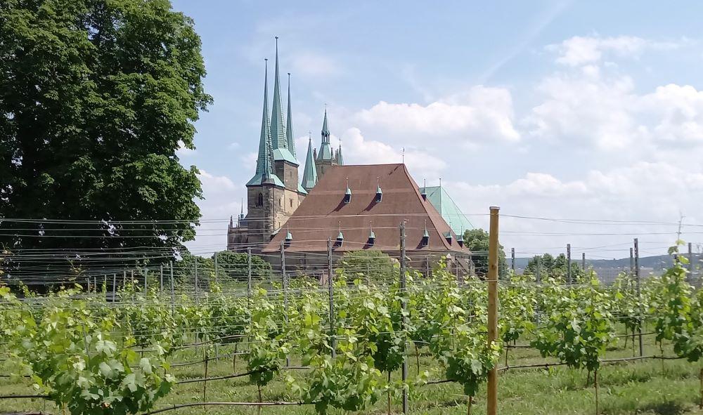 Weinberg vor der Zitadelle Petersberg in Erfurt