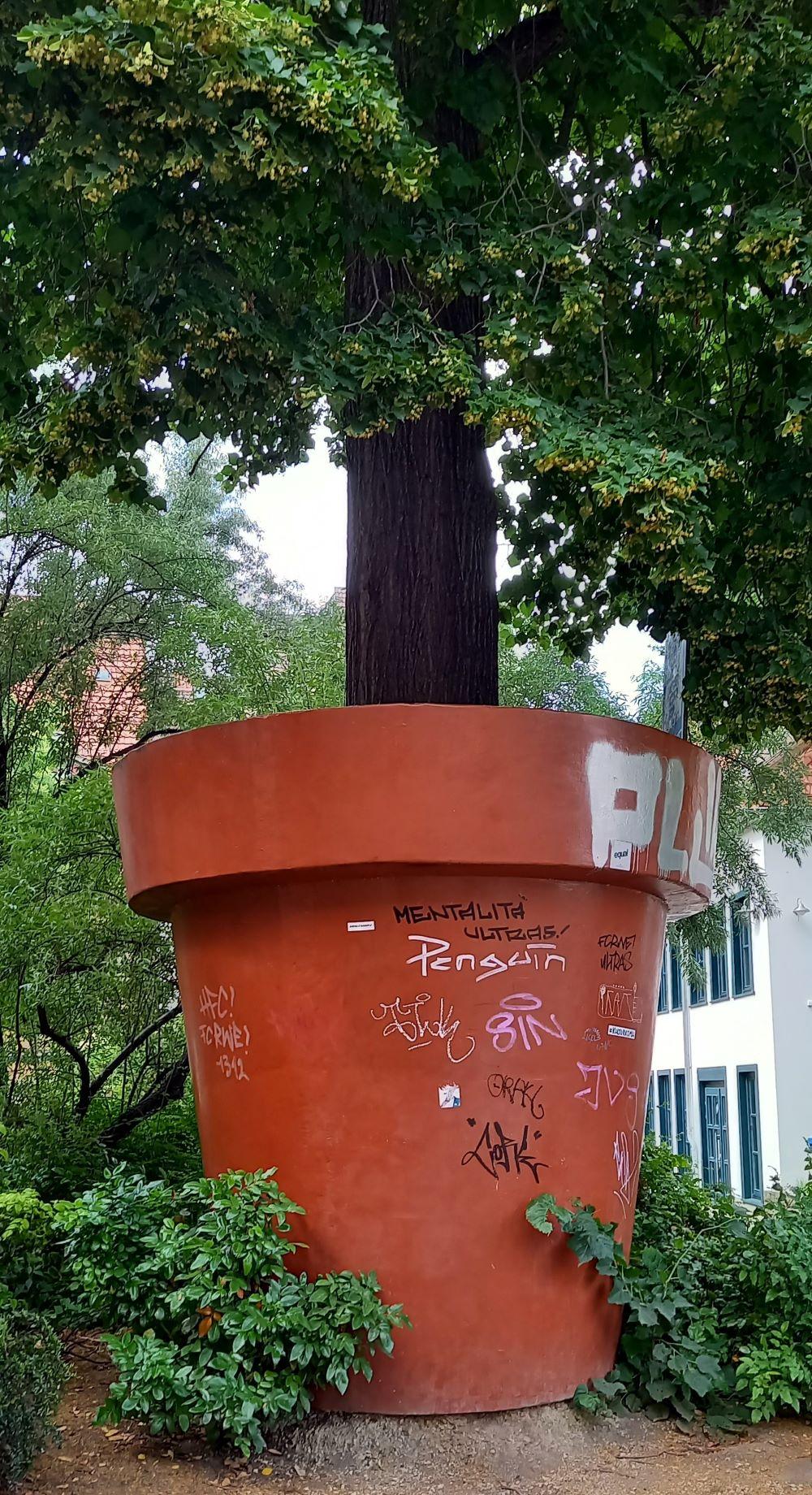 Großer Blumentopf mit Baum in Erfurt